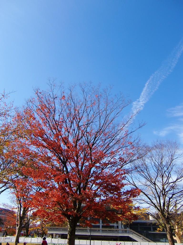 秋の京都を散策!ぶらぶらするだけで1日満喫旅