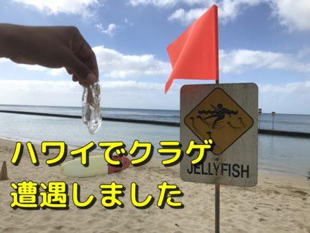 【遭遇】ハワイのビーチに危険なクラゲはいる、注意点と予防方法書く