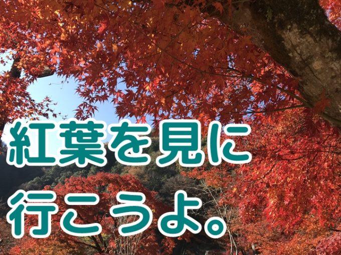 紅葉が有名な愛知の香嵐渓、混雑が少ないオススメの時間帯は?